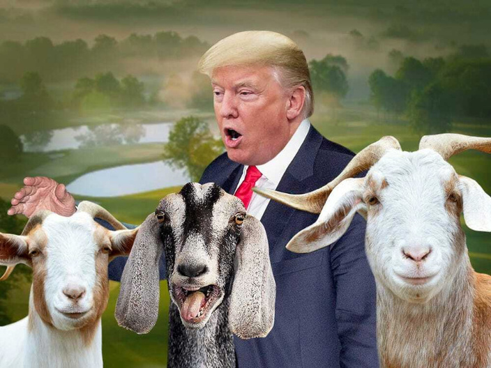Trump Saved Millions in Property Taxes in Bedminster by Using Goats