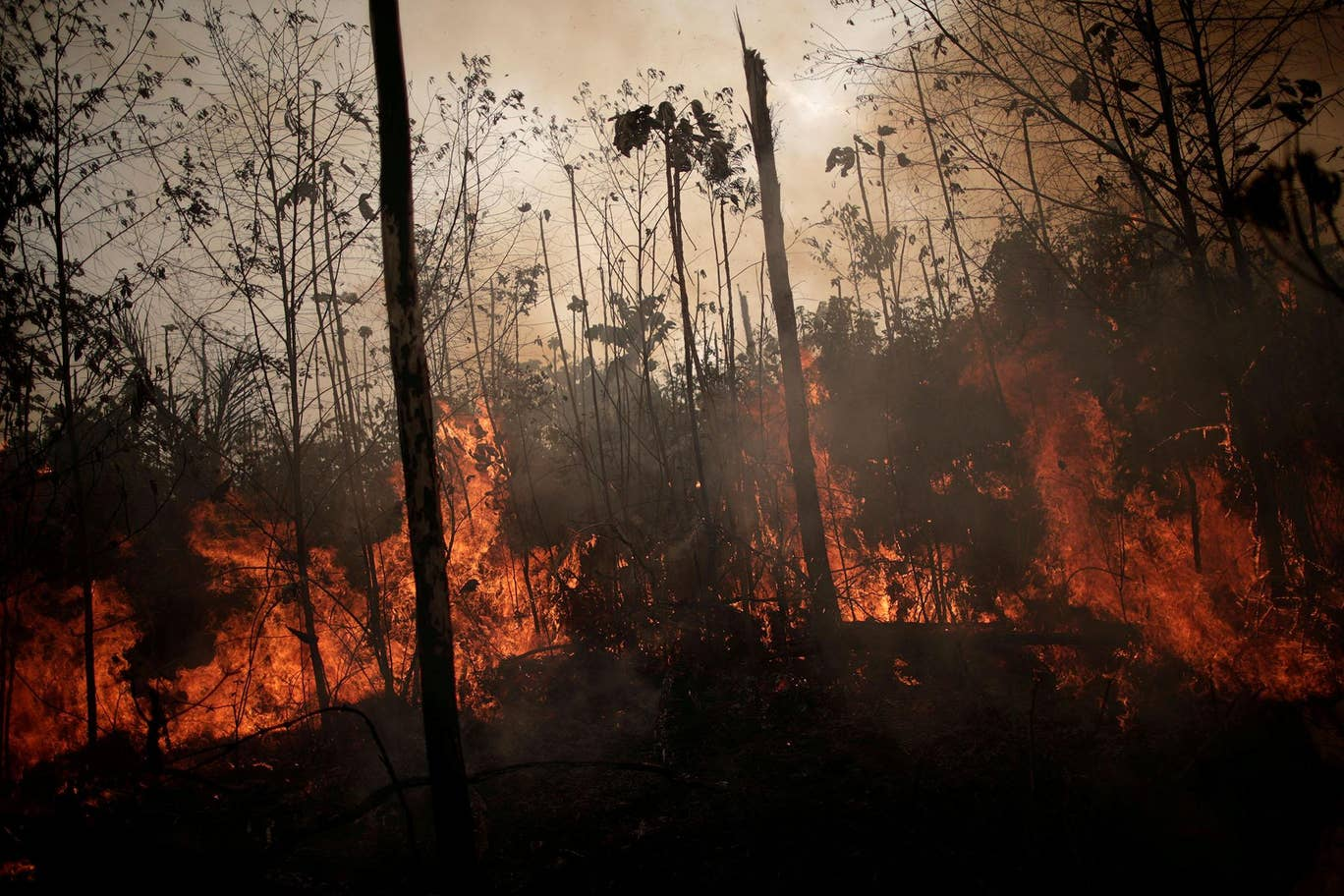 Brazil Government Rejects G7 Financial Aid Offer for Amazon Fires